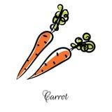 Linha vetor tirado mão da cenoura da garatuja do ícone Foto de Stock Royalty Free