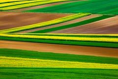 Linhas abstratas nos campos Foto de Stock Royalty Free