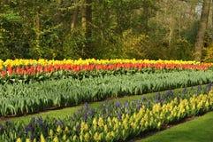 Linhas coloridas Fotos de Stock Royalty Free