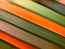 Linhas coloridas no movimento Fotografia de Stock