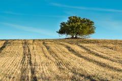 Linhas de árvore Imagem de Stock Royalty Free
