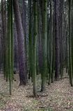 Linhas de árvores Fotos de Stock Royalty Free