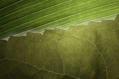 Linhas de Leafe Foto de Stock Royalty Free