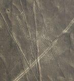 Linhas de Nazca - o cão imagens de stock royalty free