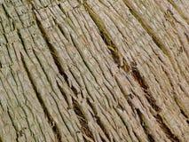 Linhas de tronco Imagens de Stock Royalty Free