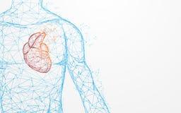 Linhas do formulário da anatomia do coração e triângulos humanos, rede de conexão do ponto no fundo azul ilustração royalty free