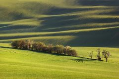 Linhas e ondas do por do sol com árvores na primavera Fotografia de Stock