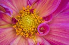 Linhas e ondas poderosas em detalhe da flor fotografia de stock