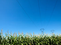Linhas eléctricas e colheitas do milho Imagem de Stock