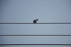 Linhas elétricas da ilha da pomba Foto de Stock