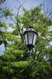 Linhas fortes e lisas de uma lâmpada de rua contra o céu e a folha verde das árvores Grace Focus no objeto fotografia de stock royalty free