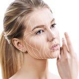 Linhas gráficas que mostram o efeito de levantamento facial na pele fotos de stock