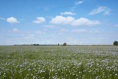 Linho azul de florescência em um campo de exploração agrícola Foto de Stock Royalty Free