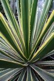 Linho de Golden_edge Maurícia Foto de Stock Royalty Free