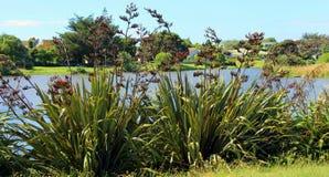 Linho de Nova Zelândia na flor Fotografia de Stock