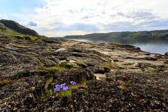 Linia brzegowa Barents morze w północnym biegunowym lecie Arktyczny ocean, Kola półwysep, Rosja obrazy stock