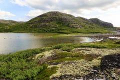Linia brzegowa Barents morze w p??nocnym biegunowym lecie Arktyczny ocean, Kola p??wysep, Rosja obrazy stock