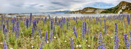 Linia brzegowa blisko Kaikoura, Nowa Zelandia - panoramiczny widok Zdjęcie Stock