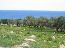 linia brzegowa cypryjczyka drewna fotografia royalty free