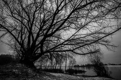 linia brzegowa i drzewa na nim Drzewa są widzieć sylwetkowi przeciw zmierzchu niebu Zdjęcia Royalty Free
