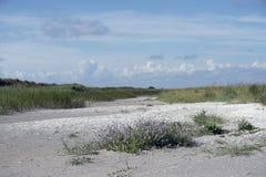 Linia brzegowa krajobrazowy Laesoe Zdjęcia Royalty Free