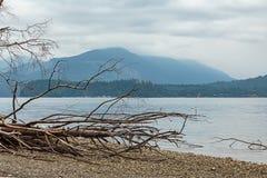 linia brzegowa puget dźwięk blisko Tacoma z spadać górą i drzewem obrazy royalty free