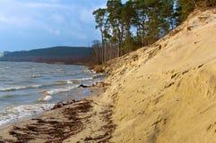 Linia brzegowa, sosny na nabrzeżu, piaskowata ziemia i sucha trawa na wybrzeżu, Zdjęcia Stock