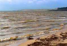Linia brzegowa, sosny na nabrzeżu, piaskowata ziemia i sucha trawa na wybrzeżu, Zdjęcie Royalty Free