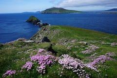 Linia brzegowa w południowym Irlandia zdjęcie stock