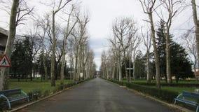 Linia deptak, avenua przejście w zimie z nagimi drzewami zaraz po deszczem pod chmurnym niebem, Zdjęcia Royalty Free