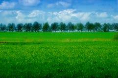 linia drzew Zdjęcia Stock