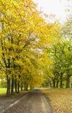 Linia drzewa w jesieni colours z ścieżką prowadzi distanc obrazy stock