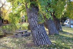 Linia drzewa Wzdłuż rzeki Zdjęcie Royalty Free