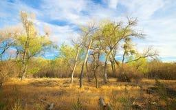 Linia jesieni drzewa Zdjęcia Royalty Free