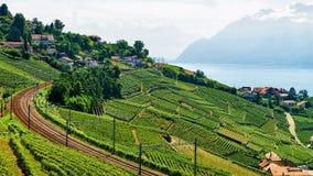 Linia kolejowa na Lavaux winnicy Tarasuje Jeziornego Genewa w Szwajcaria Obraz Stock