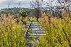 Linia kolejowa przerastająca z kwiatu szczawika pes stopą, Arundo donax gigantyczna trzcina i i drzewo obrazy stock