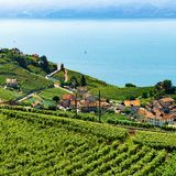 Linia kolejowa w Lavaux winnicy tarasie Jeziorny Lemański Szwajcaria Obraz Royalty Free