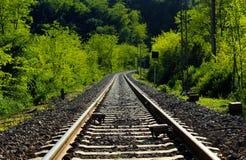 Linia kolejowa w lesie Zdjęcie Stock