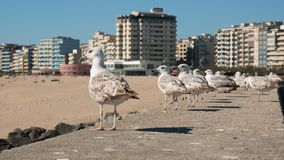 Linia seagulls umieszczał na ścianie, patrzeje nad plażą na pogodnym letnim dniu w Portugalia zdjęcia stock