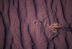 linia wzorów piasku Obraz Stock