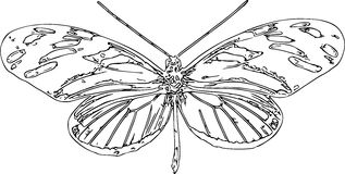 Linie Art Sketch Of ein Schmetterling Stockfotos