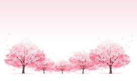 Linie des Kirschblüten-Baumhintergrundes Lizenzfreie Stockfotos