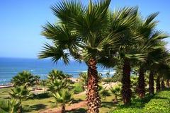 Linie drzewka palmowe w parku na oceanie wyrzucać na brzeg Na jasnym niebieskim niebie Zdjęcie Stock