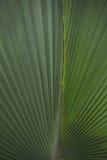 Linie eines Palmblattes Lizenzfreie Stockbilder