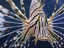 Linie Fisch Stockfoto