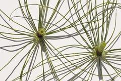 Linie i geometria Obraz Royalty Free