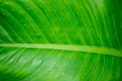 Linie na zielonym liścia tle Zdjęcia Royalty Free