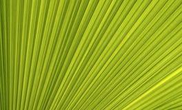 Linie und Beschaffenheit des grünen Palmblattes Lizenzfreies Stockfoto