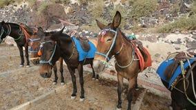 Linie von Eseln mit Sattel, Steigbügel bereit, gerittene stehende Straße, Tourismus zu sein stock video