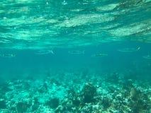 Linie von Fischen Stockbilder